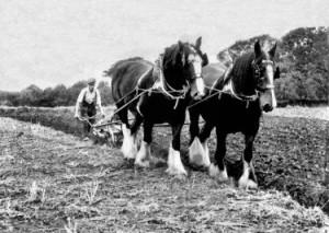 Beer-Ploughing